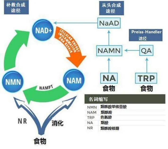 NMN对糖尿病怎么样?吃多久能治疗好糖尿病?