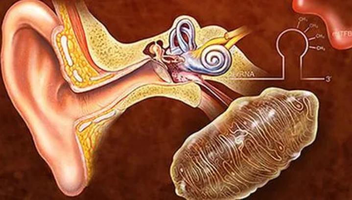 干细胞治疗耳聋效果怎么样,哪里能做干细胞注射