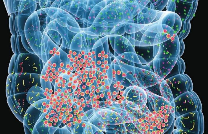小分子肽对胃溃疡怎么样.png