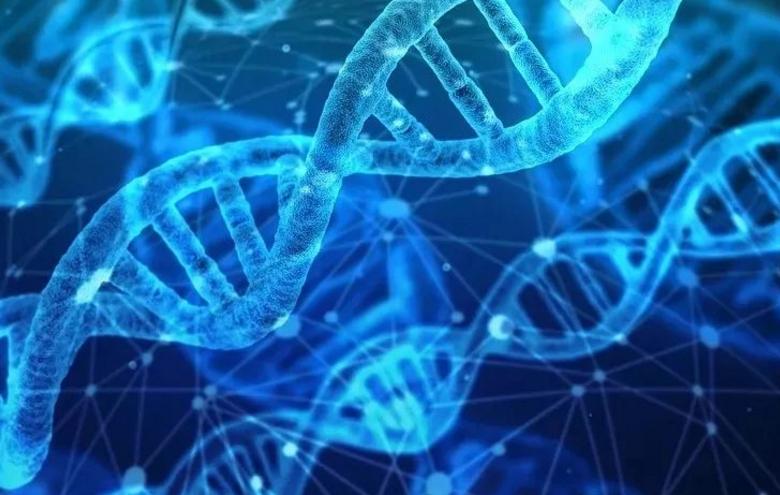 小分子肽能治疗糖尿病吗?肽从来没有骗你!