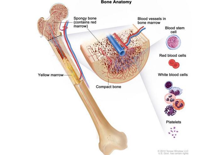 营养骨髓的中药都有哪些,营养骨髓的中成药