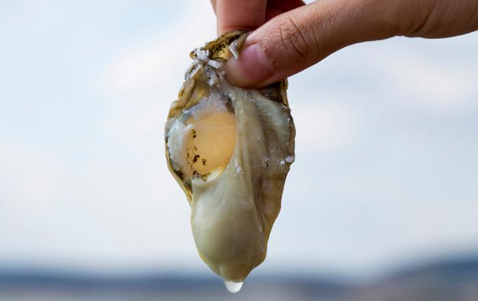 牡蛎补肾效果怎么样.png