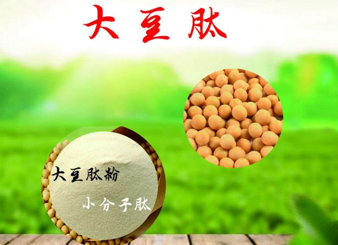 大豆肽的作用.png