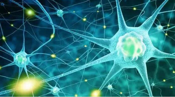 间充质干细胞和免疫细胞对治疗脑损伤中的应用